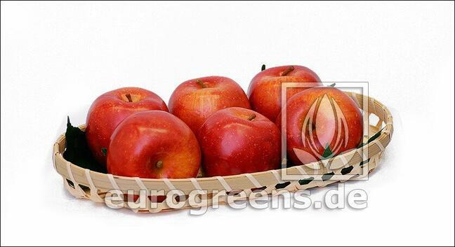 Umělé Jablko červené