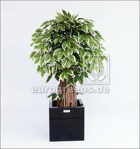 Umělý Bonsai Fíkus Liana 100 cm