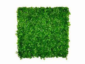 Umělý listnatý panel Ficus microcarpa - 50x50 cm