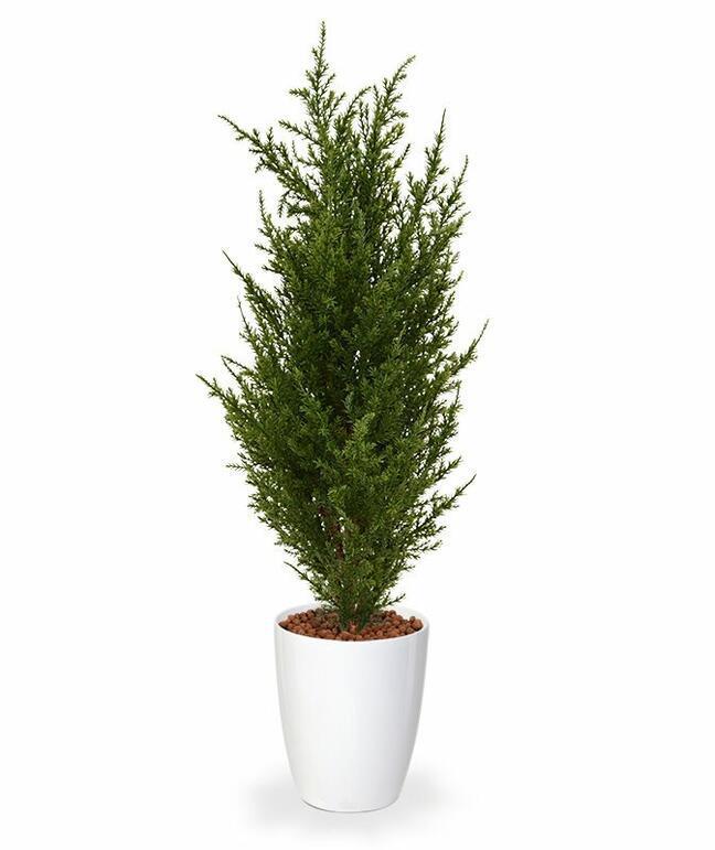 Umělý strom Cypřišek tujovitý 50 cm