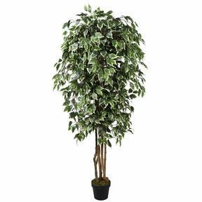 Umělý strom Fíkus Benjamin zeleno bílý 170 cm