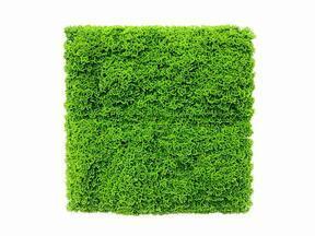 Umělý světle zelený mechový panel Moswand - 50x50 cm